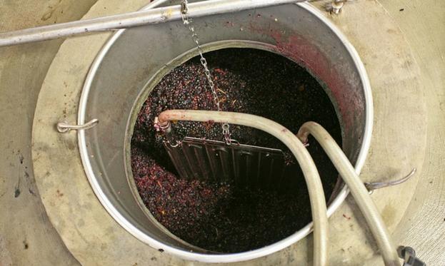 Fermentazione del vino