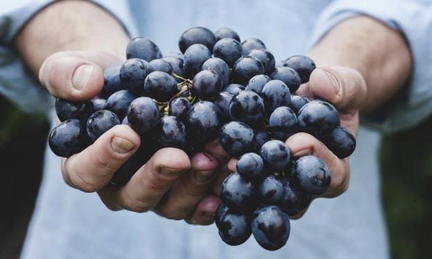 vino biologico e vino biodinamico