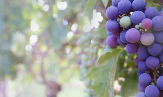 tannini nel vino