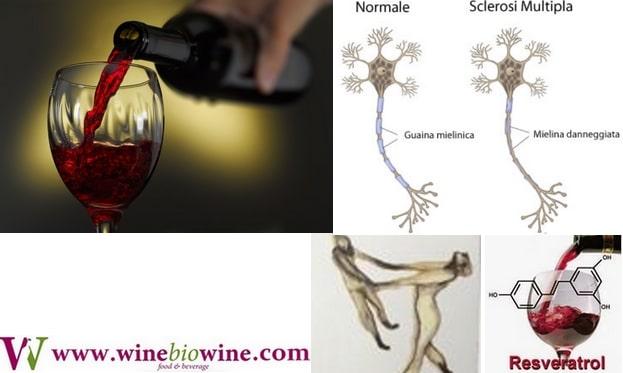 Vino rosso e Resveratrolo, due armi contro la sclerosi multipla